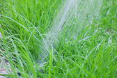 Jet of water on the background of the green lush grass — Stock Photo