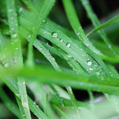 Water drops on the green lush grass — Stock Photo