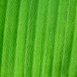 Macro background of green leaf — Stock Photo
