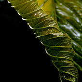 Macro background of green leaf — Stock Photo