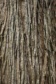 Background of bark tree — Stock Photo