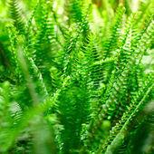 Ormbunke i regnskogen — Stockfoto