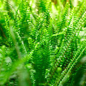 Samambaia na floresta tropical — Foto Stock