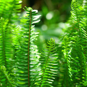 Fern in the rainforest — Stock Photo
