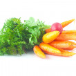 Bunch of carrots and radish with green leaves isolated on white — Stock Photo