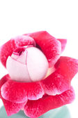 Unusual beautiful red rose in a vase — Foto de Stock