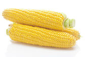 Ripe yellow corn isolated on white — Stock Photo