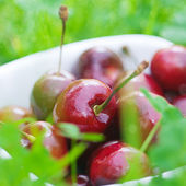 Cherries in a ceramic bowl on green grass — Stock Photo