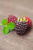 Three juicy blackberries on a wooden surface — Stock Photo