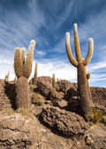 Cactus in Salar de Uyuni — Zdjęcie stockowe
