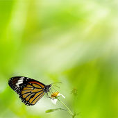 Lysande swallowtail butterfly — Stockfoto