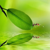 Green leaves reflecting in the wate — Stock Photo