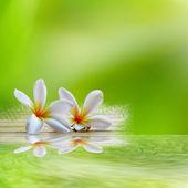 Frangipani na światło zielone deseń — Zdjęcie stockowe