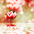 Tulips reflecting into the water — Stock Photo
