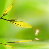 Bamboo leaves reflection — Stock Photo