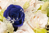 Deep blue rose — Stock Photo