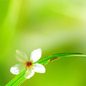 Beautiful tung flower — Stock Photo