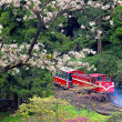 Alishan Forest train — Stock Photo