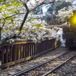 Stock Photo: AlishForest train