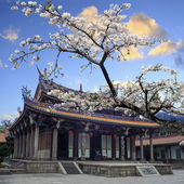 Sakura, temple and blue sky — Stock Photo