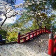 Beautiful sakura in the temple — Stock Photo #19180445