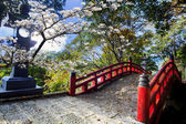 Beautiful sakura in the temple — Stock Photo