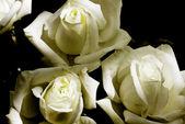 花バラ — ストック写真