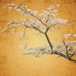 ������, ������: Sakura postcard menu