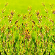 Image of fresh green grass - Stock Photo