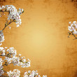 Royalty-Free Stock Photo: Sakura with nice background