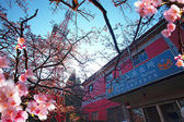Beautiful Sakura place — Stock Photo