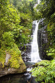Tropical waterfall in rain forest — Stock Photo