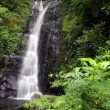 Tropical waterfall in rain forest — Stock Video #22586345