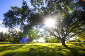 Green trees in park and sunlight — Stock Photo