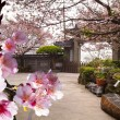 Temple with nice sakura - Stock Photo