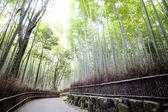 Shee bamboe wandelpaden, japan — Stockfoto