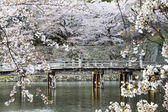 Hikone Castle cherry blossoms — Stock Photo