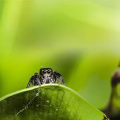 Spider with nice green background — Stock Photo