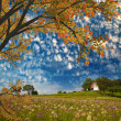 Nice flowers and beautiful sky — Stock Photo