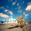 Stock Photo: Blue and White Church bell with cat