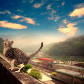 Cat stand on the wall — Stock Photo