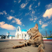 Blue and White Church bell with cat — Stock Photo