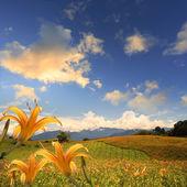 Daylily flower at sixty Stone Mount — Stock Photo