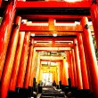 torii gate tunnel in kyoto, japan — Stock Photo