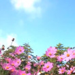 Stock Video: Daisy and blue sky