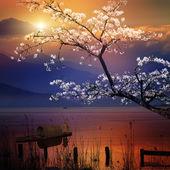 Beautiful sunrise — Stock Photo