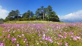 Daisy and blue sky — Stock Photo