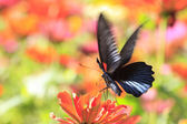 Butterflies flying — Stockfoto