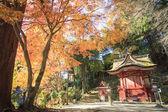 Autumn Japanese garden with maple — Foto de Stock
