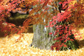 Autumn Japanese garden — Foto de Stock